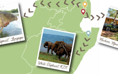 Hello Hoedspruit! Your AfriCamps safari grows to three locations