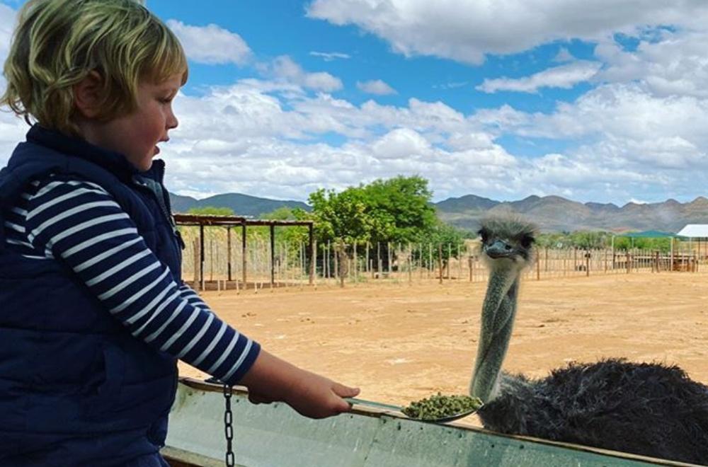 AfriCamps Klein Karoo Oudtshoorn Child feeding ostrich