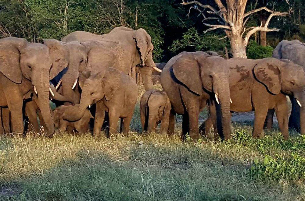 AfriCamps at Mackers Hazyview Elephants