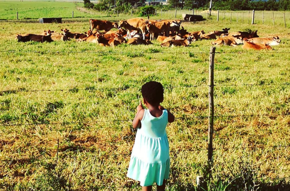AfriCamps at Oakhurst Wilderness Child looking at cows