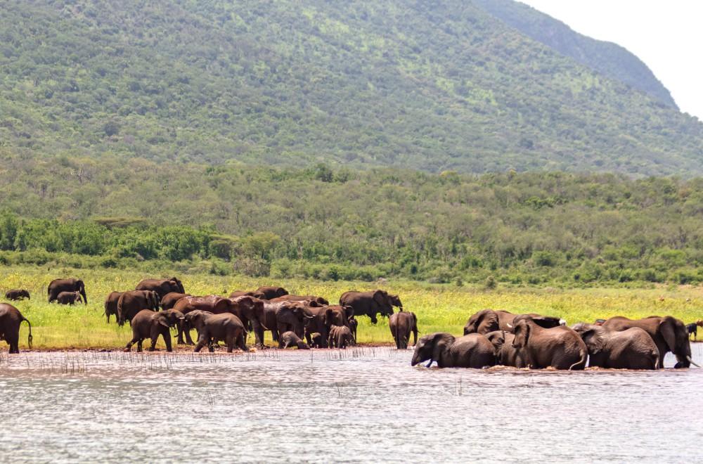 AfriCamps at White Elephant Pongola Elephant Safari