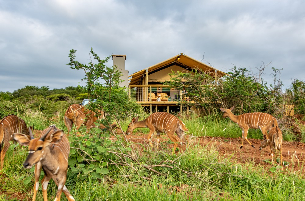 AfriCamps at White Elephant Pongola Glamping Tent Wildlife