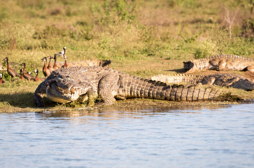 AfriCamps at White Elephant Pongola Crocodile Water Safari
