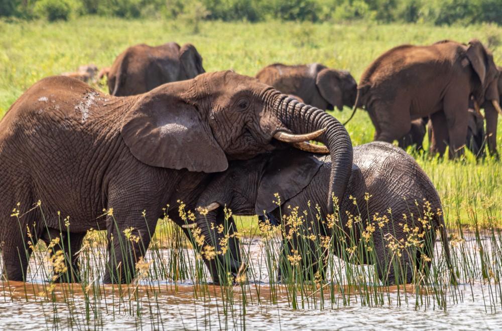 AfriCamps at White Elephant Pongola Elephants Water Safari