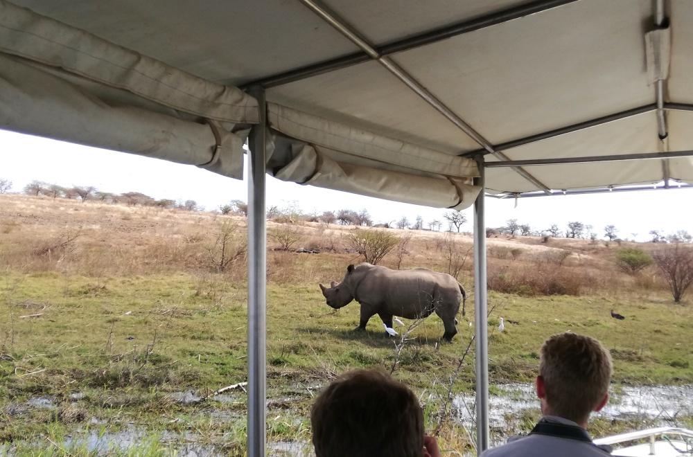 AfriCamps at White Elephant Pongola KZN Rhino Spotting