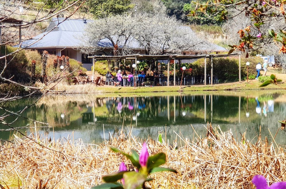 africamps magoebaskloof limpopo glamping south africa (3)