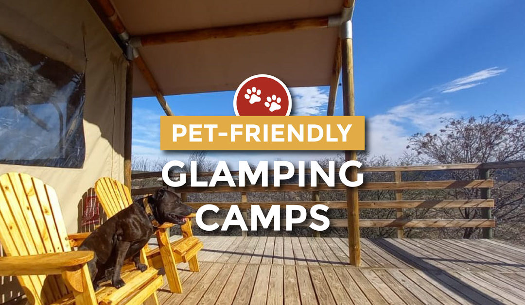 Pet-friendly glamping at AfriCamps