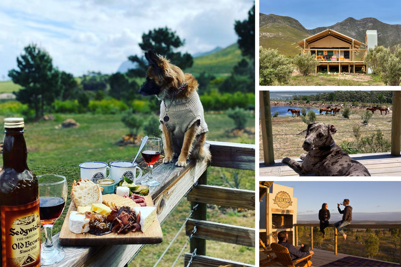 africamps stanford hills glamping south africa pet friendly accommodation