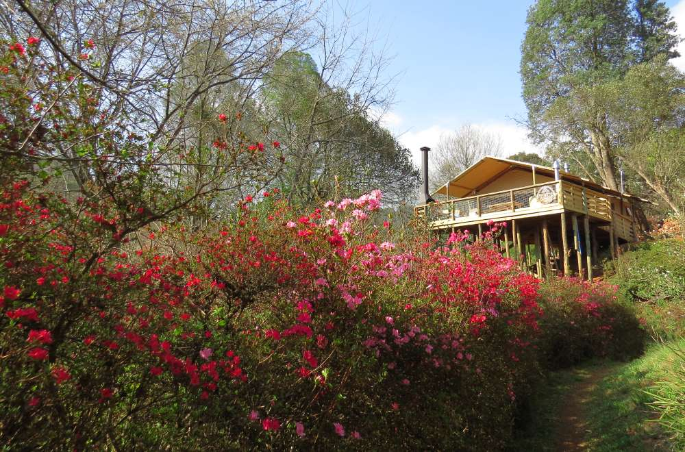 africamps magoebaskloof boutique glamping limpopo south africa (8)